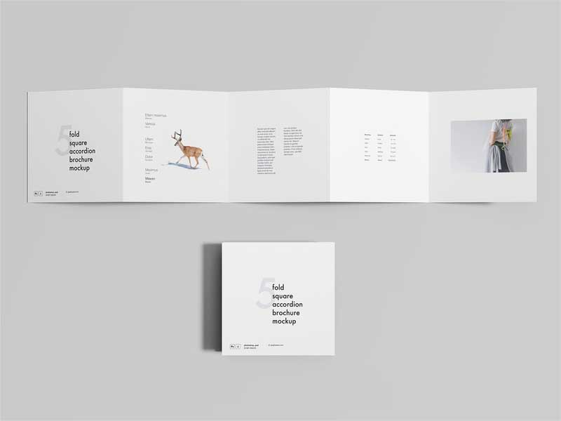 Free-5-Fold-Accordion-Brochure-Mockup