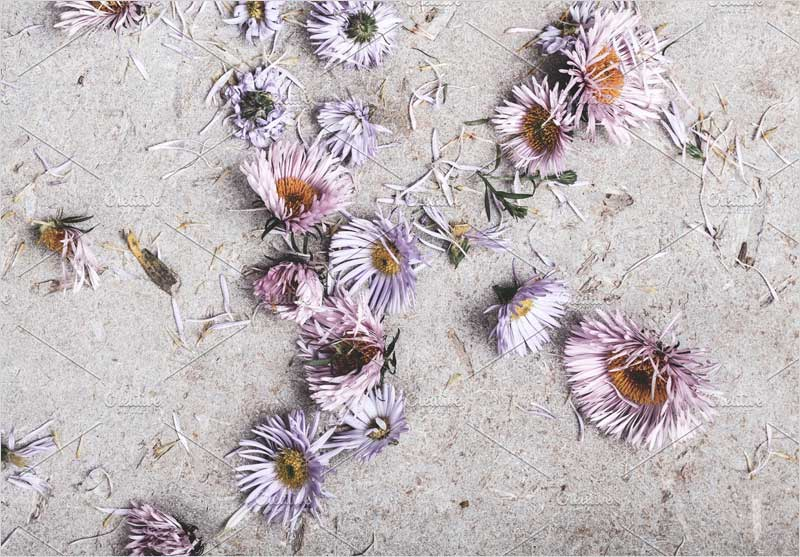 Asters-and-daisies-on-concrete